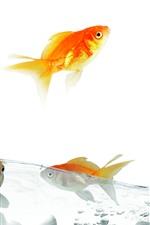 Preview iPhone wallpaper Goldfish, water, splash, jump, white background