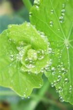 iPhone обои Зеленые листья крупным планом, капли воды