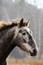 Cavalo, rosto, juba