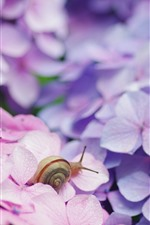 Preview iPhone wallpaper Insect, snail, pink flowers, hydrangea