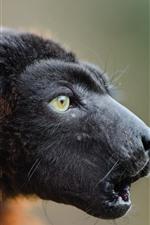 Preview iPhone wallpaper Lemur, head close-up