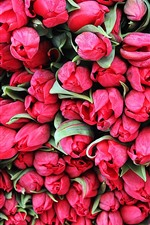 Preview iPhone wallpaper Many red tulips, flowers background
