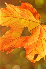 Preview iPhone wallpaper Maple leaf, love heart
