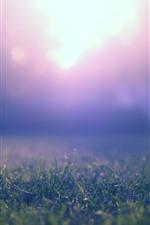 Prado, grama, brilho, luz do sol, nebuloso