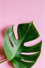 Preview iPhone wallpaper One green leaf, pink background