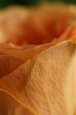 Preview iPhone wallpaper Orange rose macro photography, petals