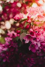 Pink flowers bloom, glare, spring