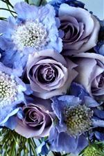 Purple roses, bouquet, flowers