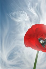 Preview iPhone wallpaper Red poppy flower close-up, sky, white clouds