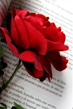 Preview iPhone wallpaper Red rose, book