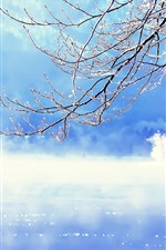 Preview iPhone wallpaper Slovenia, winter, twigs, snow, lake, fog, morning, winter
