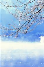 Slovenia, winter, twigs, snow, lake, fog, morning, winter
