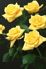 Some yellow roses, black background