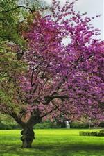 Preview iPhone wallpaper Spring, flowers, trees, grass, garden