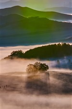 Preview iPhone wallpaper Sun rays, trees, fog, autumn morning, Bashang grassland, China