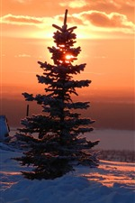 Preview iPhone wallpaper Trees, snow, winter, sunrise, red sky