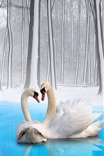 Two swans, couple, winter, snow, trees, pond