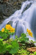 Preview iPhone wallpaper Waterfall, yellow flowers