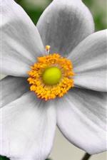 Preview iPhone wallpaper White flower close-up, petals, pistil