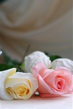 White, pink, red roses, tea, cup