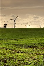 Windmills, grass, birds