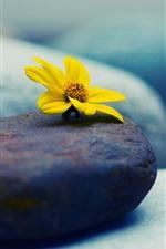 Yellow flower, stones