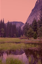 Preview iPhone wallpaper Yosemite National Park, forest, dusk, fog