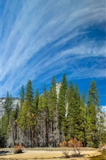 Preview iPhone wallpaper Yosemite National Park, trees, river, blue sky, clouds