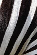 Preview iPhone wallpaper Zebra, black and white lines