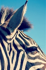 Preview iPhone wallpaper Zebra, ear, head, mane