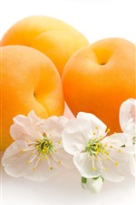 Apricots, flowers, white background
