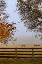 Autumn, horses, fence, trees, fog, morning