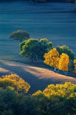 Preview iPhone wallpaper Autumn, trees, grassland