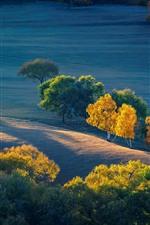Preview iPhone wallpaper Autumn, trees, grassland