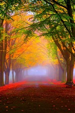 Beautiful autumn, fog, trees, path, park, hazy