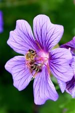 Preview iPhone wallpaper Bee, pollen, purple flowers