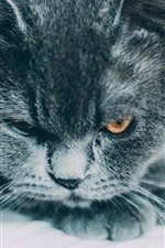Preview iPhone wallpaper Black cat look at you, face, eyes, rest