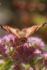 Preview iPhone wallpaper Butterfly, wings, insect, pink flowers