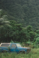Car, trees, cliff, waterfall