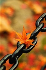 Chain, maple leaf, hazy background