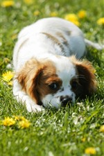 Preview iPhone wallpaper Cute puppy sleep in grass, yellow flowers
