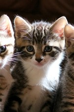 Preview iPhone wallpaper Cute three kittens, look