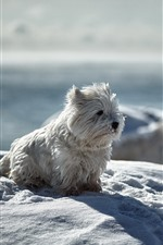 Preview iPhone wallpaper Cute white puppy, snow, winter