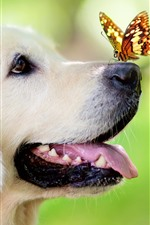 Preview iPhone wallpaper Dog, nose, butterfly