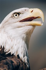 Preview iPhone wallpaper Eagle close-up, head, eye, beak