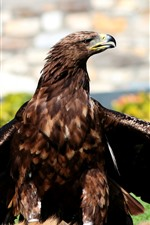Preview iPhone wallpaper Eagle, wings, beak, standing on ground