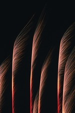 Preview iPhone wallpaper Fireworks, like trees, night
