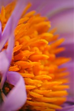 Flower macro photography, pistils