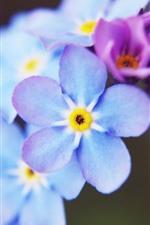 Vorschau des iPhone Hintergrundbilder Vergissmeinnicht, blaue Blumennahaufnahme, rosa Blume