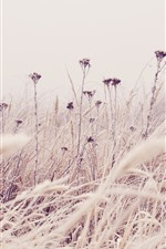 Preview iPhone wallpaper Grass, wildflowers